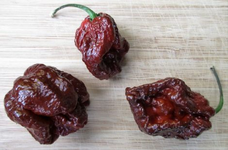 7Pod Douglah Brown (Chocolate) chili paprika mag /10 szem