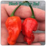 Black Panther Red form chili paprika mag /10 szem