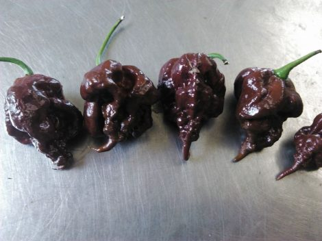 Carolina Reaper Chocolate chili paprika mag /10 szem