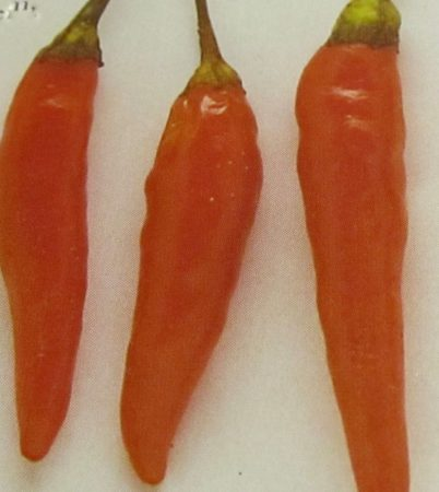 Cayenne Orange chili paprika mag /15 szem