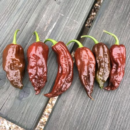 Chocolate Butlah (CS-typ) chili paprika mag /10 szem