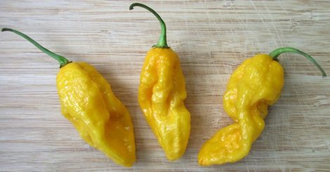 Devil Tongues Yellow chili paprika mag /10 szem