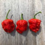 Dragon's Breath chili paprika mag /10 szem
